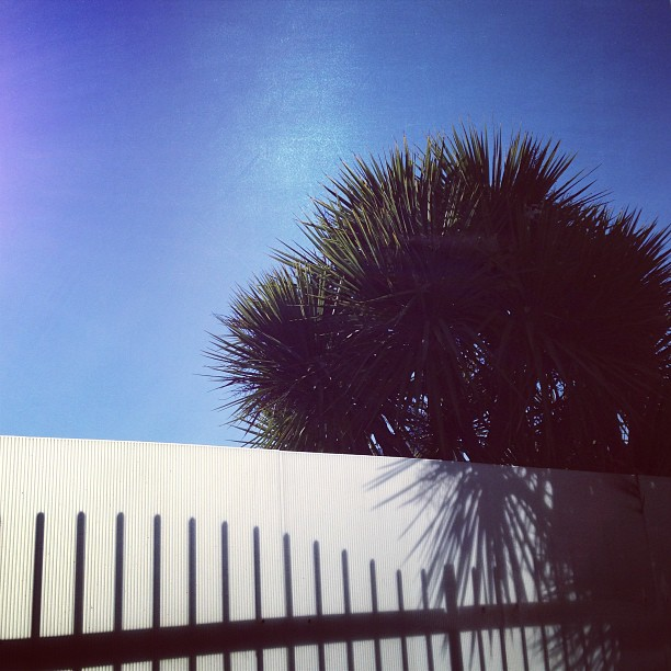 Hello #tropical #london #spring