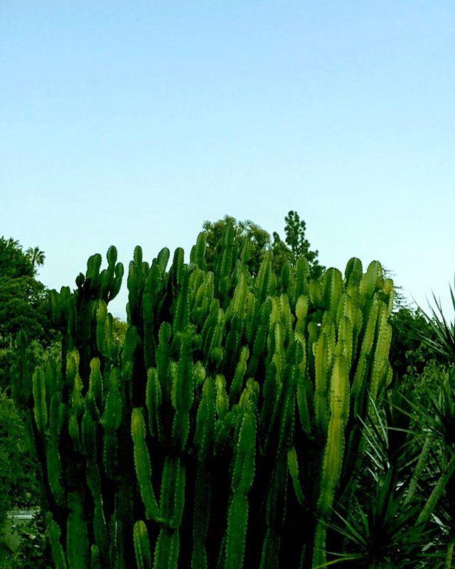 When in LA............#losangeles #california #cactus #nature